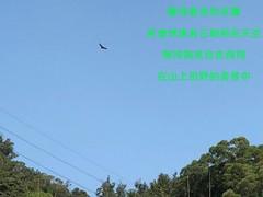 螢幕快照 2018-11-15 14.14.18 (mingledlighting) Tags: led light bulbs camping carnvan car chiming truck auto email:kimchimingorg email:ling711218gmailcom