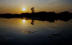 Sonnenuntergang am Moor von Tribsees (petra.foto busy busy busy) Tags: sonnenuntergang wasser see spiegelung reflexion sonne fotopetra nature landschaft light abendlicht 5dmarkiii mecklenburgvorpommern