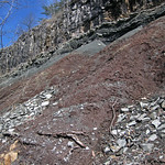 Paleosol (Cave Branch Member, Slade Formation, Upper Mississippian; Clack Mountain Road Outcrop, south of Morehead, Kentucky, USA) 23 thumbnail