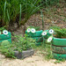 Frogs Flower Pots made with painted Tires in Mui Ne, Vietnam