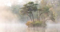 Serenity (Wim Boon Fotografie) Tags: canoneos5dmarkiii canonef70200mmf4lisusm leefilternd09softgrad leelandscapepolariser oisterwijksebossenenvennen wimboon holland nederland natuur netherlands water reflectie reflections