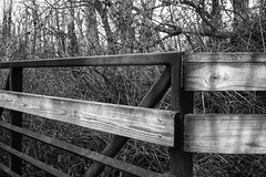 Woodsy Winter Angles (Modkuse) Tags: monochrome bw blackandwhite rural outdoors woods angles art artphotography artistic photoart fineartphotography fineart fujifilm fujifilmxt2 xt2 xf1024mmf4rois fujinon fujinonxf1024mmf4rois