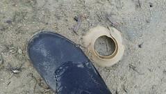Sand collar: eggs of a moon snail (Family Naticidae) (wildsingapore) Tags: seringatkias lazarus naticidae gastropoda mollusca shore island singapore marine coastal intertidal seashore marinelife nature wildlife underwater wildsingapore
