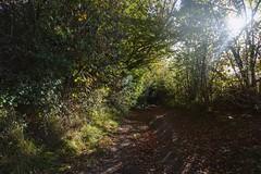 North Downs Way (aussietramper) Tags: north downs way kent surrey england uk hiking running trail