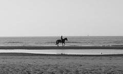 De Haan (Gabriela Oravova) Tags: belgium dehaan lecoqsurmer blackandwhite bw belgië belgique canonpsg7x northsea noordzee merdunord horse cheval