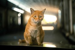 My Beautiful One (JaS Photoland) Tags: cinelens cookeortal50mmf2 cats cata sony sonya7riiimark3 sonya7riii taylorhonson ortal cooke
