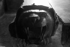 IMG_2191ri (kleiner nacktmull) Tags: asien art musik kunst asia black blackandwhite bw canon camera dslr dorf village eos music foto flickr grau grey incredibleindia indien incredible india kleinernacktmull kolle kamera lens longwa lungwa monochrome monochrom nacktmull objektiv photo stephankolle stephan schwarz schwarzweiss sw weiss white log drum logdrum mondistrict mon district konyak chief angh myanmar birma burma 5dmarkii 5dmkii 5d 24105mm 2019 border grenze nagapeople nagaland naga headhunting headhunter sevensisters seven sisters ureinwohner natives tiger tribe tribes tribals tribal