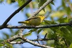 (The Transit Photographer) Tags: rideautrail trailhead marshlandsconservationarea fallmigration warblers