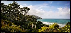 Orokawa (Falcdragon) Tags: orokawa beach northisland newzealand sonya7riialpha ilce7rm2 zeissloxia2821 water ocean pacific weekend hike track trees native