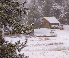 Vacancy - Lonely cabin in the woods (Karon Elliott Edleson-Away for a week) Tags: bigbearlakeca cabin winter forest woods mountains snowfall pines