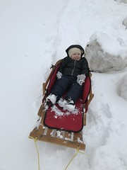 """Dani in Her Sled • <a style=""""font-size:0.8em;"""" href=""""http://www.flickr.com/photos/109120354@N07/39967580403/"""" target=""""_blank"""">View on Flickr</a>"""