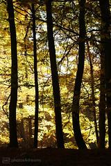 forest (photos4dreams) Tags: spaziergang walk feld wald wiese forest trees bäume photos4dreams p4d photos4dreamz