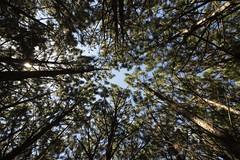En el bosque (Ce Rey) Tags: forest bosque challengeyouwinner cyunanimous