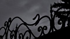 Monochrome. (ALEKSANDR RYBAK) Tags: монохромный ажурный навершие ограждение дерево небо тучи првода осень сезон погода настроение monochrome openwork pommel fencing tree sky clouds lead autumn season weather mood