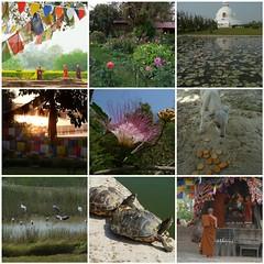lumbini1 (belight7) Tags: nepal lumbini mosaic collage travel buddha buddhist