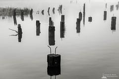 Old Wharf on the Willapa No. 9, Raymond, Washington, 2018 (Steve G. Bisig Photography) Tags: thatpnwlife visitpnw bestofthenorthwest blackandwhite blackandwhitephotography blackandwhitephoto bnw bnwaddicted bnwcaptures bnwcreatives bnwlife bnwmagazine bnwofourworld bnwplanet bnwphotography cascadia cascadiaexplored dock explorewashington fog foggy justgoshoot landscape landscapephotography livewashington nikon nikonnofilter nikonz7 northamerica northwest outdoorphotography outdoors pacificcounty pacificnorthwest pilings pnwbnw pnwdiscovered pnwexplored pnwisbeautiful pnwisbest pnwlife pnwwonderland raymond sonorthwest thenwadventure unitedstates upperleft upperleftusa usa wanderwashington washington washingtonstate washingtonexplored water wharf z7