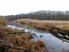P1030489 (rpealit) Tags: scenery wildlife nature saffin pond mahlon dickerson reservation morris county park jefferson twp beaver dam weldon brook