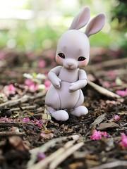 BunBun Out and About (AluminumDryad) Tags: cocoriang tobi anthrobjd bjd tinybjd balljointeddoll resin bunny rabbit mulch crepemyrtle