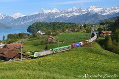 BLS: Re 485 019, Einigen (CH) (Alexandre Zanello) Tags: re485 traxx bombardier f140 ac1 bls cargo connecting europe rola ralpin novara boschetto freiburg breisgau einigen berneroberland thunersee eiger mönch jungfrau alpes alpen alpi alps montagnes lac lake mountains suisse schweiz svizzera svizra switzerland