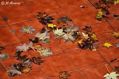 Otoño. Fall (JC Álvarez) Tags: looking close friday hojas