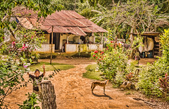 Welcome home! (Pejasar) Tags: dog boy home rural eltesoro guatemala homesweethome child kid joy delight