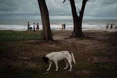 * (Sakulchai Sikitikul) Tags: street snap streetphotography summicron songkhla sony 35mm leica thailand a7s samilabeach beach dog seascape sea
