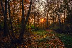 """late afternoon in autumn """"Paris bois de boulogne"""" (laurent.triboulois) Tags: forêt sousbois arbre feuille forest tree nature leaf autumn automne"""