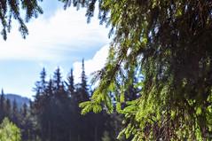 Trip to Mount Kukul-August-2018-26 (pavlo.malyshchak) Tags: travel mountains carpathians ukraine family summer vacation forest