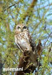 110633136 (TARIQ HAMEED SULEMANI) Tags: sulemani tariq tourism trekking tariqhameedsulemani winter wildlife wild birds nature nikon