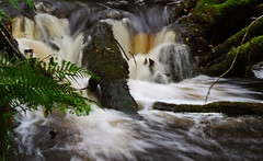 After the Rain (wheehamx) Tags: fairlie glen waterfall ayrshire