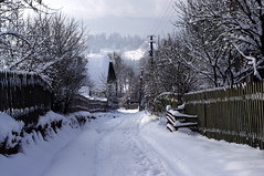 Ukraine. Winter in the village (videodigit16) Tags: ukraine landscape outdoor sky clouds village mountains hill vorokhta carpathians winter snow skiing tourizm recreation mountain nature image serene trees forest cold silence calmly tree plant picea moss mist wood road mountainside chalet