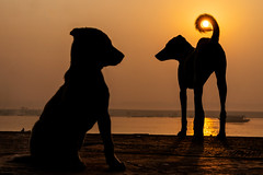 Keep the sun (Tavepong Pratoomwong) Tags: tavepong streetphoto varanasi india dog sun moment tail orange love keep fun funny shadow silhouette twilight