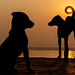 Keep the sun (Tavepong Pratoomwong) Tags: tavepong streetphoto varanasi india dog sun moment tail orange love keep fun funny shadow silhouette twilight