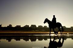 DSC09239 (ZANDVOORTfoto.nl) Tags: horse horses paarden paard zonsopkomst sunrise sunset beach zee zandvoort netherlands nederland kust zon sun