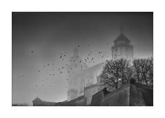 the cursed castle (Armin Fuchs) Tags: arminfuchs würzburg lavillelaplusdangereuse festung festungmarienberg castle fortress fog birds crows trees enchanted autumn november