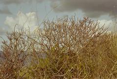 To the top (ale2000) Tags: canon kodak kodakgold kodakfilm piscinadivenere ql19 sicilia sicily estate expired summer analog analogue lomography kodakgold200 gold200 film 35mm pellicola filmisnotdead believeinfilm milazzo path upanddown sight nature natura sentiero