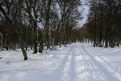 Auchronie, Glenesk, Angus, Scotland (macconnechy) Tags: fujixf23mmf14 winter scotland angus glenesk auchronie