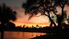 January 9th Sunset (Jim Mullhaupt) Tags: sunset sundown dusk sun evening endofday sky clouds color red gold orange pink yellow blue tree palm outdoor silhouette weather tropical exotic wallpaper landscape nikon coolpix p900 pond lake water reflection manateecounty bradenton florida jimmullhaupt cloudsstormssunsetssunrises