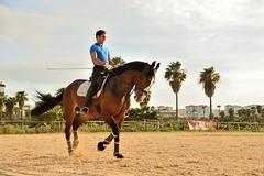 Dressage... (Raquel Borrrero) Tags: horse dressage doma caballo jinete equestrian hipica animal jerezdelafrontera cádiz españa spain trotting