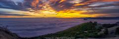 Low Fog Sunrise (Jaykhuang) Tags: lowfog sunrise trivalley livermore burn bayarea eastbay panorama jayhuangphotography highresolutionmural