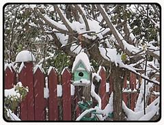 Winter Snow In My Garden -HFF (bigbrowneyez) Tags: snow winter inverno neve tree branches birdhouse adorable charming lovely nature artful natura hff fence wood happy happyfencefriday winterssnowinmygarden canada bello beautiful ottawa striking fun
