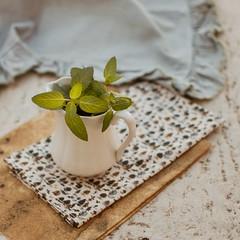 Menta (Irene Carbonell) Tags: menta floreros 35mm fabric