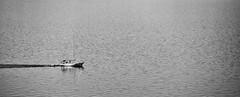 velero (boriskombol) Tags: bw bnw bn blackandwhite blancoynegro biancoenero nb noiretblanc cb crnobijelo sw schwarzweis monochrome mono monotone monocromatico monocromo canon 6d eos ef70200l outside outdoor mar meer mer sea water wasser eau agua bateauàvoile velero sailboat segelboot