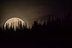 Moon in the Forest (edhendricks27) Tags: moon forest lunar space nightsky