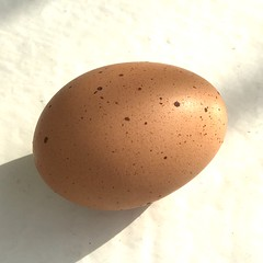 Last week's news: I have an egg, too (Joann aka Jee Whiz!) Tags: egg brown speckles shell