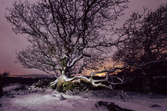 Reach Out (J C Mills Photography) Tags: peakdistrict derbyshire winter tree snow night lightpainting gnarly oak longexposure