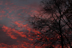 Good Morning! (@FunkyAppleTree) Tags: sunrise november london sky morning trees tree clouds colours