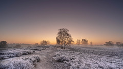 Frosty Morning (michel1276) Tags: westruperheide halternamsee nrw germany heide bäume batis1828 batis2818 sonya7iii sonnenaufgang himmel sky sunrise landschaft landscape