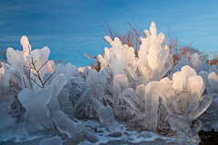 _MG_7330 - Icy plants. (j. mercier) Tags: nature wild outdoors outdoor outside minnesota jerrymercier mercier beauty beautiful cold winter gooseberryfallsstatepark gooseberryfalls snow ice icy blue white snowy frozen park parks state gooseberry falls crystal crystals plants shealth covered bluesky morning