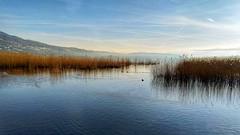 Il mio lago (Luc1659) Tags: lago varese italy acqua landscape azzurro panorama